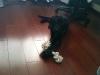 Şangay\'da Evlatlık Köpek