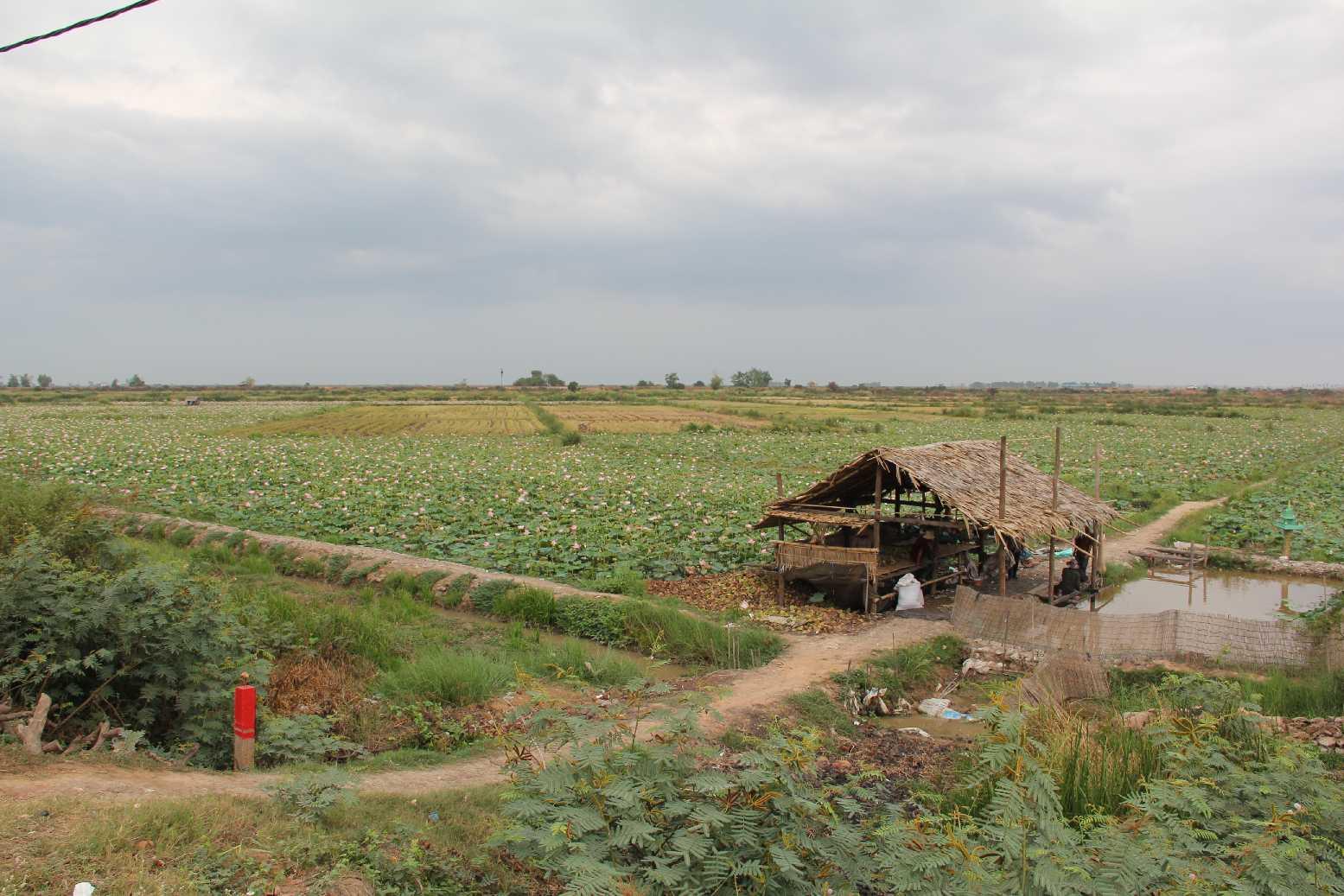 Kamboçya - Tonlé Sap - Yüzen Köy