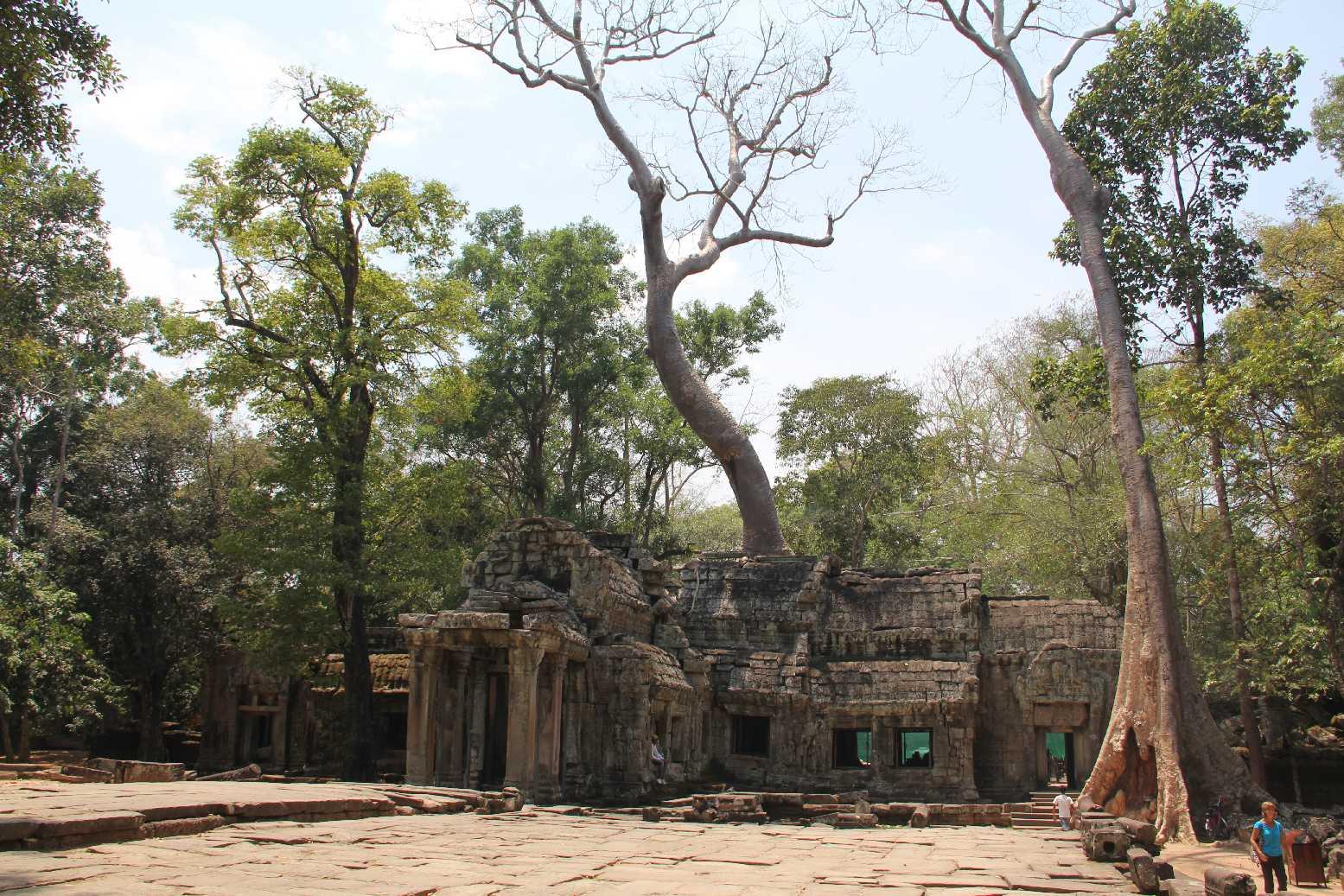 Kamboçya - Siem Reap - Ta Prohm