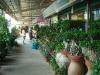 Şanghay Hongqiao Çiçek Pazarı - Flower Market