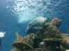 Şanghay Okyanus Akvaryumu