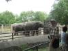 Şanghay Hayvanat Bahçesi