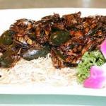 waterbug-shanghai