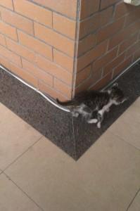 Şanghay'da Bir Kedi Macerası