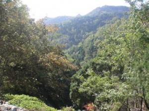 Dağda 1000 çeşit bitki örtüsü bulunuyor. Yani, dağ bölgesinin yaklaşık % 80'lik bölümü bitkilerle kaplı. Hatta, bölgedeki bazı ağaçların ve özellikle selvi ağaçlarının, han hanedanı döneminde dikildiği söylenmekte.